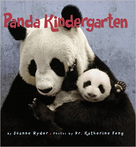 PB Panda kindergarten